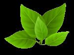 new_leaf